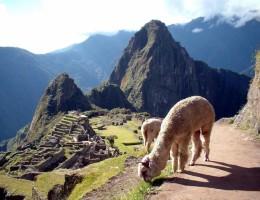 AMANECERES DEL INCA (LIM)