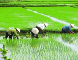 Viaje de Capacitación Técnica Agropecuaria CHINA 2018