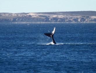 Bariloche - Esquel - Puerto Madryn - Salida 25 de Noviembre