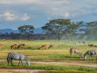 Etiopía, Kenya y Tanzania desde Buenos Aires - 27 de Febrero